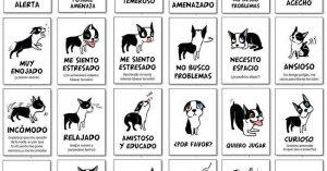 Lenguaje corporal de tu perro
