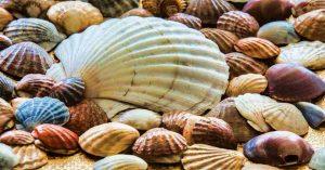mancia-con-conchas-de-mar